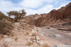 A promising side valley of Wadi Arab - ein vielversprechendes Seitental des Wadi Arab